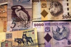 Geld mit Tierbildern Stockbilder