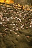 Geld-regen stock foto's