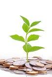 Geld wachsen Stockbilder