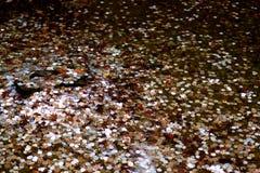 Geld in water Stock Afbeelding