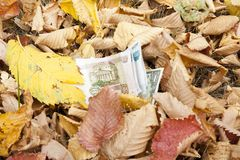 Geld wird mit gefallenen Blättern besprüht stockfoto