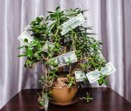 `` Geldbaum ` fette Frau mit Dollarscheinen auf den Niederlassungen Stockfotos