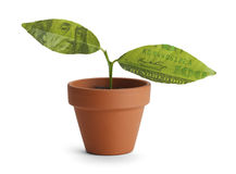 Geldboom Stock Afbeelding