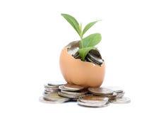 Geldboom het groeien van de muntstukken binnen ei. Royalty-vrije Stock Afbeeldingen