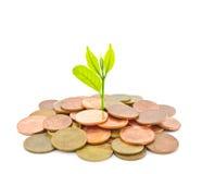 Geldboom het groeien van een stapel van muntstukken. Stock Foto's