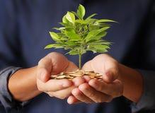 Geldinstallatie het groeien van muntstukken ter beschikking Royalty-vrije Stock Foto's