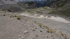 Gele alpiene bloemen die in de wind blazen stock video