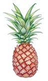 Gele Ananas Royalty-vrije Stock Foto