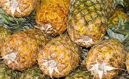 Gele ananas Royalty-vrije Stock Afbeeldingen