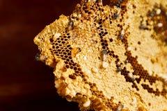 Gele bijenkorf Royalty-vrije Stock Foto's