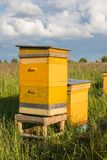 Gele bijenkorf twee in de zomerlandbouwbedrijf op groene weide met blauwe hemel stock foto
