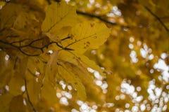 Gele bladeren Stock Foto's