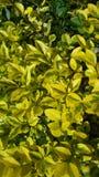 Gele bladeren backgroun Royalty-vrije Stock Fotografie
