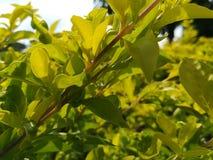 Gele bladeren in bruine takken met onduidelijk beeldachtergrond Stock Afbeeldingen
