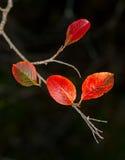 Gele bladeren De herfst Royalty-vrije Stock Afbeelding