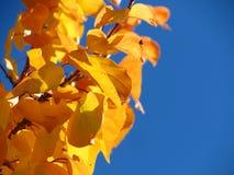 Gele bladeren in de herfstpark stock afbeelding
