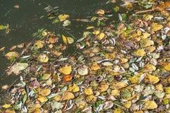 Gele bladeren die op het water drijven Royalty-vrije Stock Afbeelding