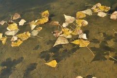 Gele bladeren die op het water drijven De herfst Royalty-vrije Stock Foto's
