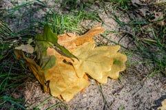 Gele bladeren die op het zand in zonnig weer liggen royalty-vrije stock afbeeldingen