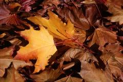 Gele bladeren in een stapel Royalty-vrije Stock Foto's