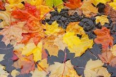 Gele bladeren in een vulklei Stock Afbeeldingen