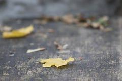 Gele bladeren Houten achtergrond Royalty-vrije Stock Afbeeldingen