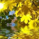 Gele bladeren met water Stock Afbeelding