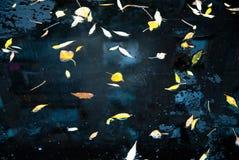 Gele bladeren op asfalt en vulklei Stock Fotografie
