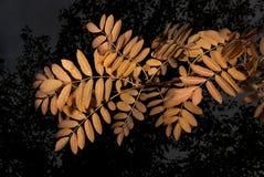 Gele bladeren op de donkere herfst als achtergrond Stock Foto's