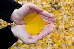 Gele bladeren op de palmen. stock foto