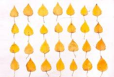 Gele bladeren op een rij Stock Foto's