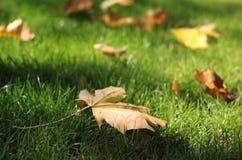 Gele bladeren op gras stock afbeeldingen