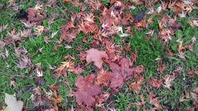 Gele bladeren op groen gras in de vroege herfst in Polen stock foto
