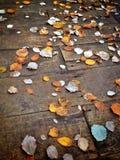 Gele bladeren op hout Stock Afbeeldingen