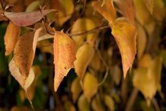 Gele bladeren op T-stuk Stock Foto