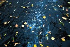 Gele bladeren op verse asfalt en vulklei Stock Afbeeldingen