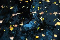 Gele bladeren op verse asfalt en vulklei Royalty-vrije Stock Foto's