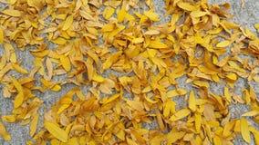 Gele bladeren op vloer Stock Foto