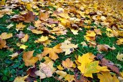 Gele bladeren ter plaatse Royalty-vrije Stock Foto