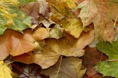 Gele bladeren in vaas stock foto's