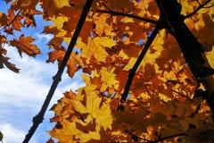 Gele bladeren van de herfst tegen de blauwe hemel, de herfstachtergrond royalty-vrije stock foto's