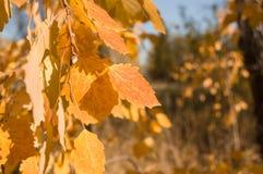 Gele bladerenachtergrond Royalty-vrije Stock Afbeelding