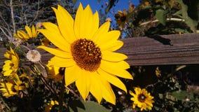 Gele bloei stock foto