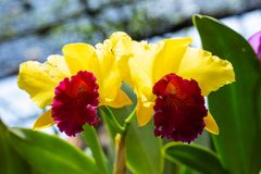 Gele bloeiende orchidee stock fotografie