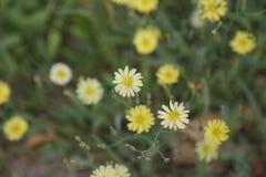 Gele bloem ï ¼  Royalty-vrije Stock Afbeelding