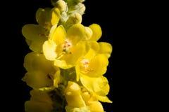 Gele bloem royalty-vrije stock foto