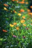 Gele bloem Stock Foto