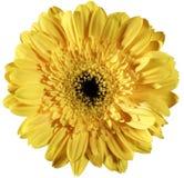 Gele bloem stock afbeelding
