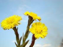 Gele bloem Royalty-vrije Stock Afbeeldingen