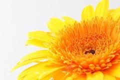 Gele bloem royalty-vrije stock foto's